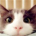 大猫是谁哇哇