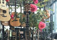 三叶吉他教室