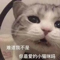 渝万丶柒貓