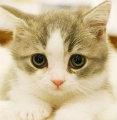 懒猫是只喵
