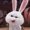 兔子精my