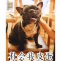 狗王李天王