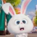 兔子蹦跳跳