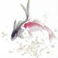 小鱼小鱼吃虾米