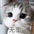 AE86长青