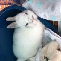 11兔是仙女兔没错了